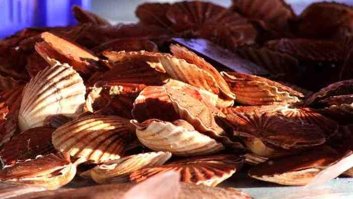 Où manger des fruits de mer à Cabourg?