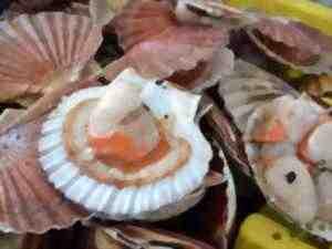 Où manger un plateau de fruits de mer en Normandie?